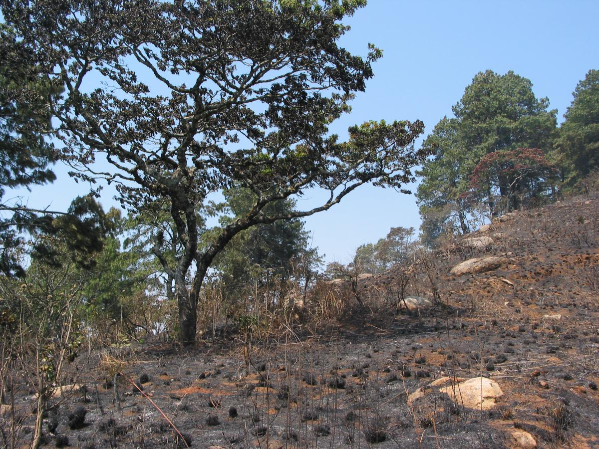 Zomba Mountain Reserve, badly damaged by fires this year (Photo: Malcolm Hudson)